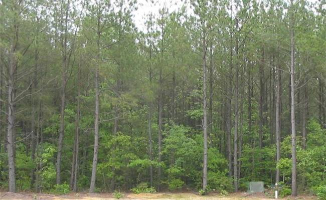 LOT 48 PLANTATION Place, King & Queen County, VA 23091