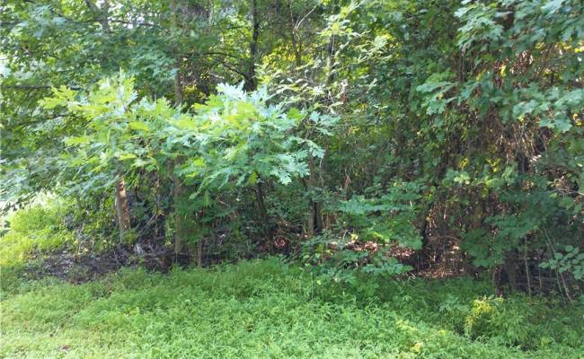 Lot 22 Burnt Mill Road, Surry County, VA 23883